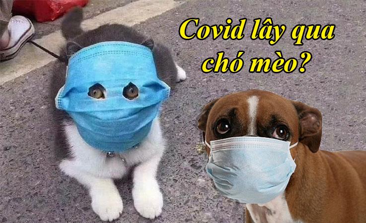 Covid-19 có lây từ thú cưng (chó mèo) sang người không?